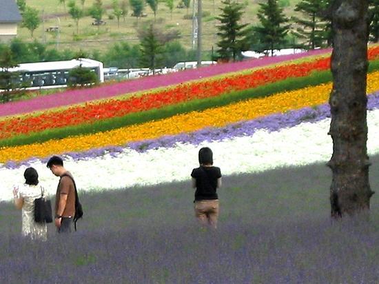 夏 ラベンダー園ファーム富田 服装 2007年7月撮影