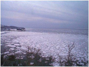 冬のタンポポ No,9 2003年3月号 著者:村石孝枝 写真:オホーツクドットコム