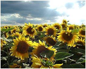 真夏の夜の夢 No,23 2004年8月号 四季のエッセイ 著者:村石孝枝 写真:オホーツクドットコム