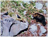森の掟 No,26 2004年11月号 知床四季のエッセイ 著者:村石孝枝 写真:オホーツクドットコム