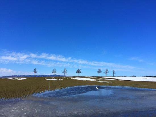 雪解けのメルヘンの丘に白鳥2羽 大空町女満別