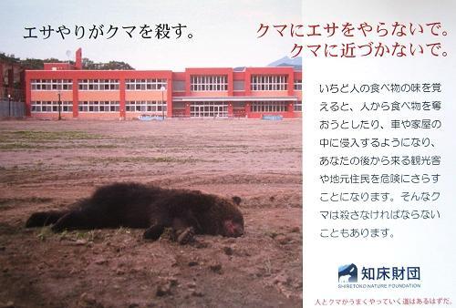 「餌やりが熊を殺す」知床国立公園 世界自然遺産知床
