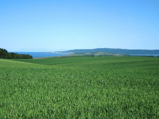 オホーツク海と能取湖が望める麦畑Ⅱ 北見市常呂町