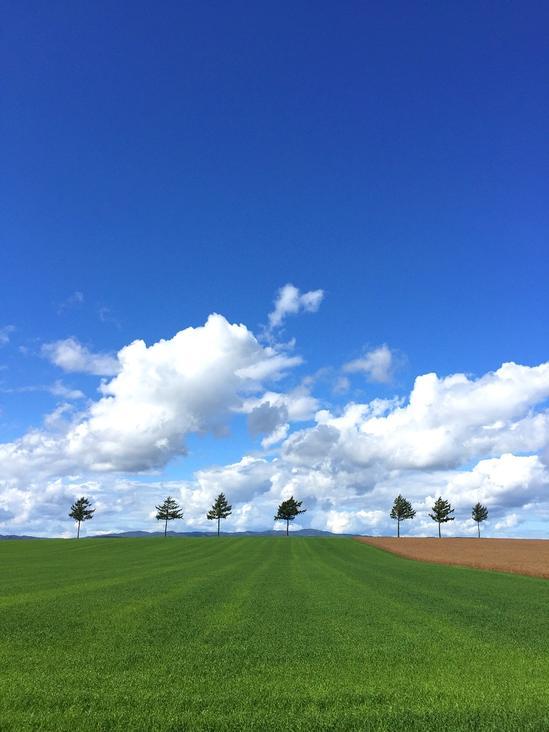 メルヘンの丘 収穫後の麦畑2 大空町女満別