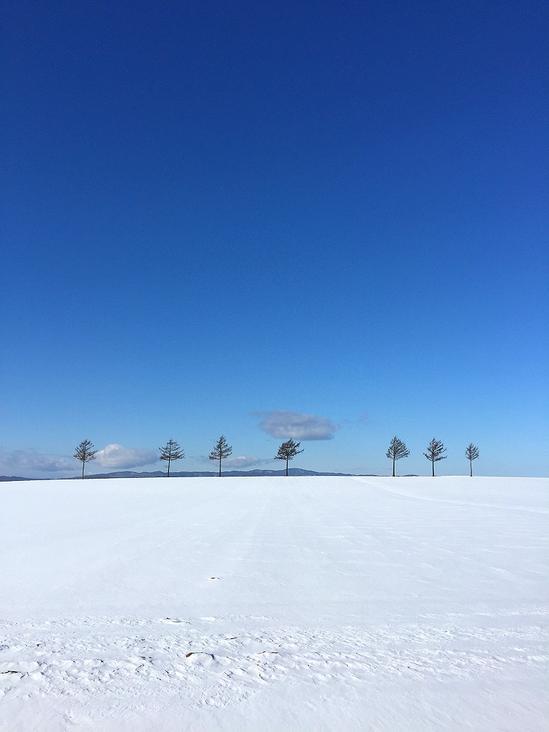 メルヘンの丘&雪原の野生動物の足跡 2021年1月6日