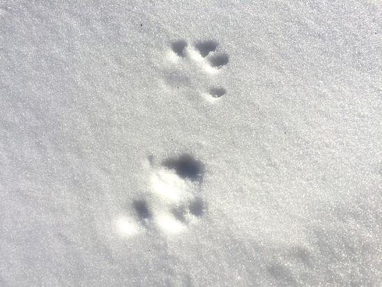 メルヘンの丘&雪原の野生動物の足跡