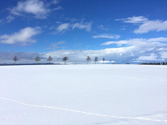 メルヘンの丘 雪原に残る野生動物の足跡 大空町女満別&アバ