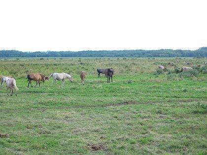 馬放牧 涛沸湖