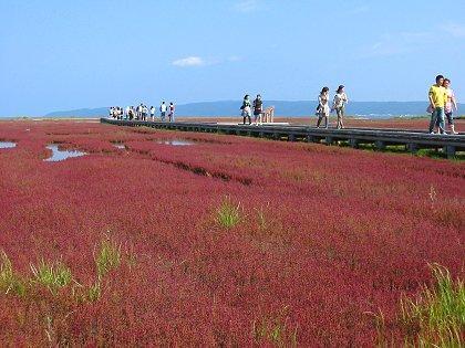 網走 サンゴ草