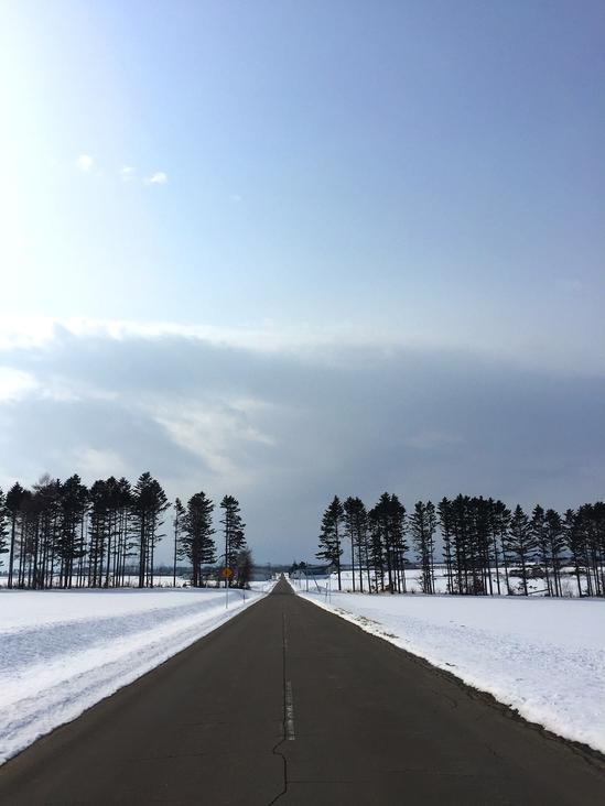 雪原の防風林 故黒澤明監督 映画「夢」の撮影ロケ地? 大空町女満別