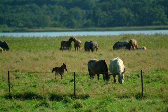馬放牧 濤沸湖 小清水町