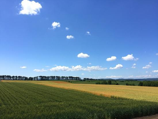 3種類の麦畑 北海道大空町女満別