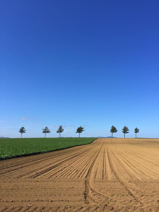 メルヘンの丘 収穫後のジャガイモ畑 北海道大空町女満別