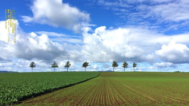 メルヘンの丘  収穫後のジャガイモ畑 PC壁紙 北海道大空町女満別
