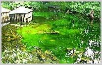 湧水池 湧水量:毎分5トン