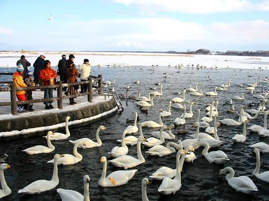 流氷 JR釧網線「北浜駅」 白鳥公園 網走市